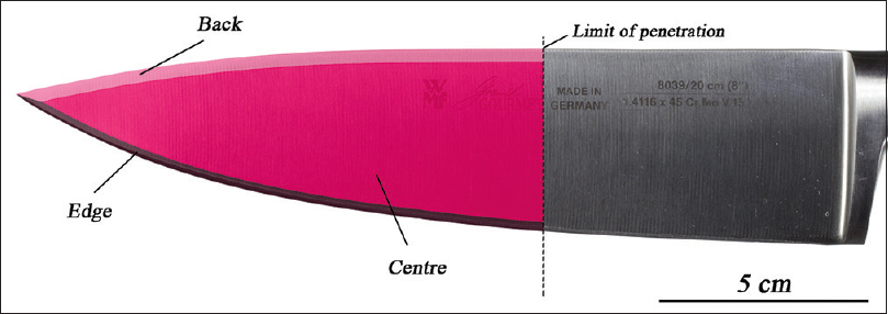 Figure 10: Distribution of fibres (number of fibres/cm<sup>2</sup>) from the pyjama recovered from the chef's knife blade (second segmentation). The highest density was observed on the edge (i.e., cutting edge), followed by the center and the back of the blade