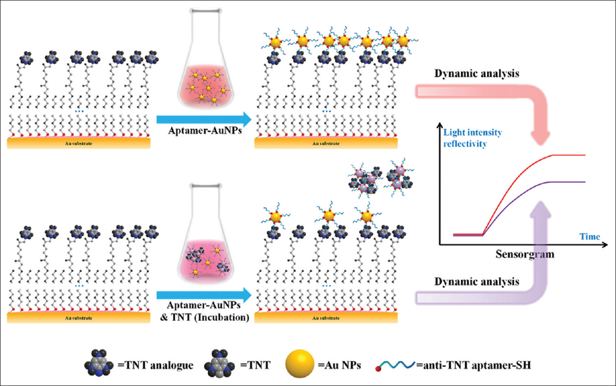 Figure 1: Flowchart of 2,4,6-trinitrotoluene detection using gold nanoparticle-enhanced surface plasmon resonance aptamer